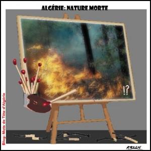 + Algérie: Nos forêts brûlent! dans Réflérire Nature-morte-300x300